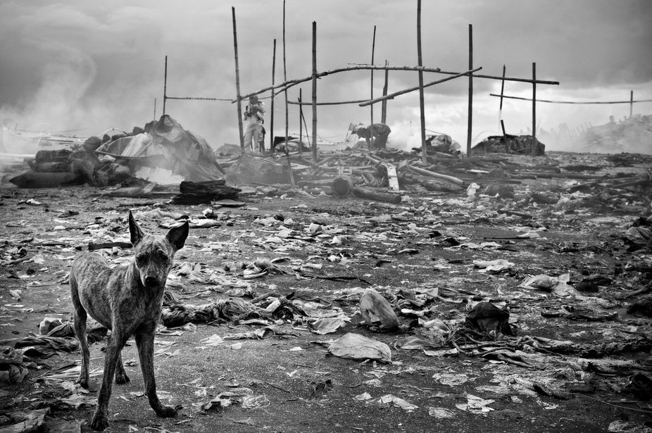 I captured this scene at a dumpsite near the bay. I dog wanders a round possibly searching for fo...
