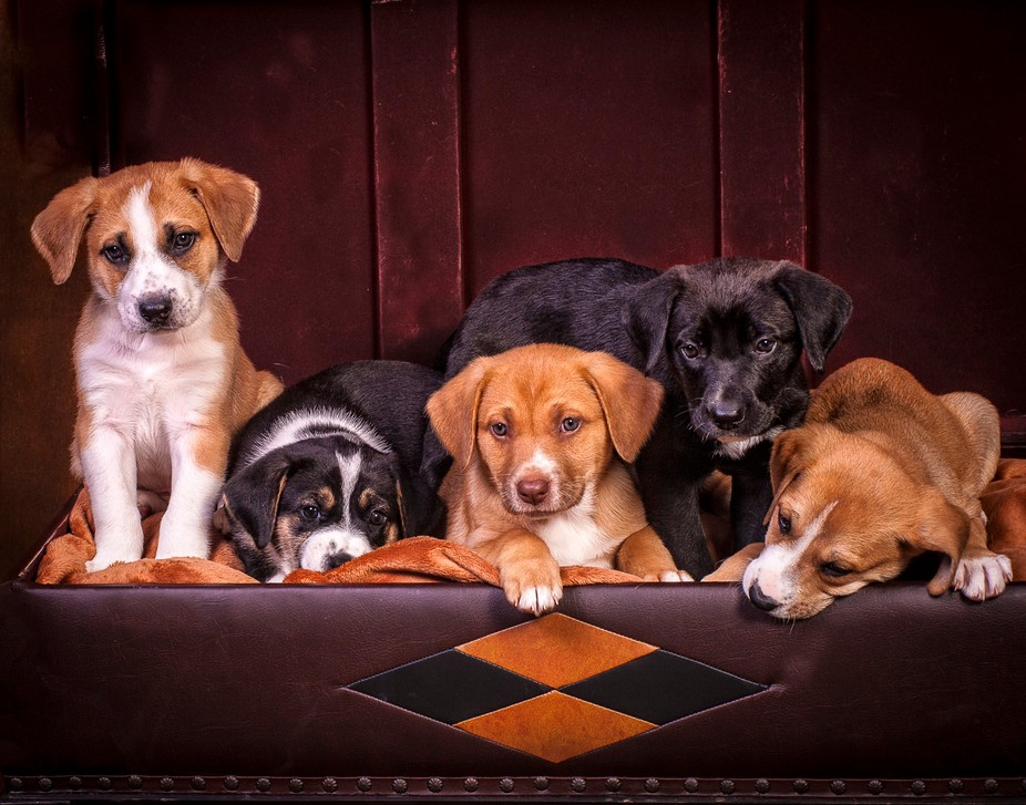 Puppies in foster care at a local rescue