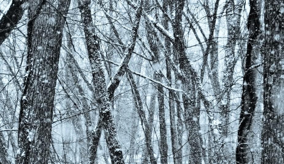White Forest Deux