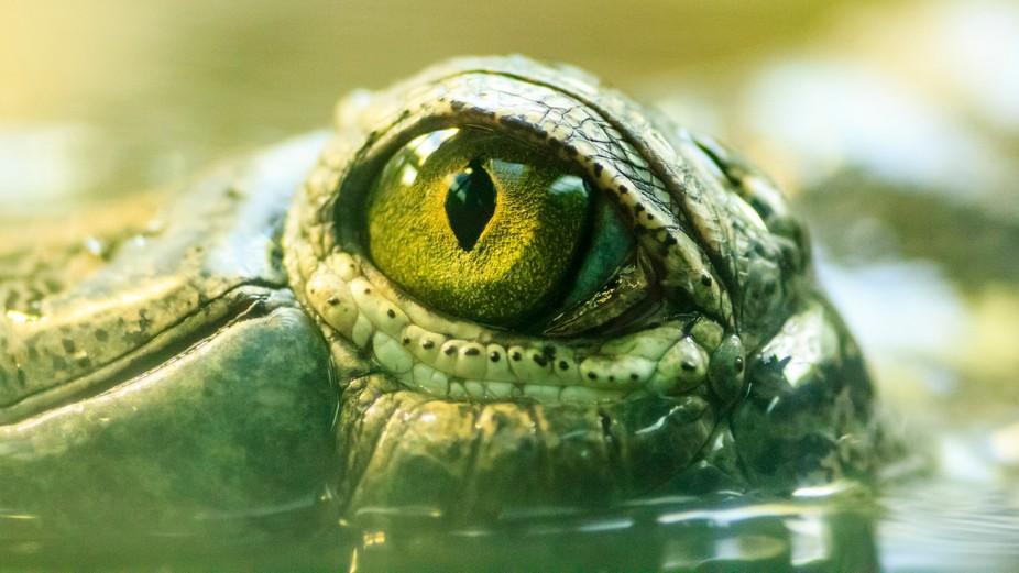 Eye of the Gavialis gangeticus. Taken during: Scott Kelby's Worldwide Photowalk 2015 - P...