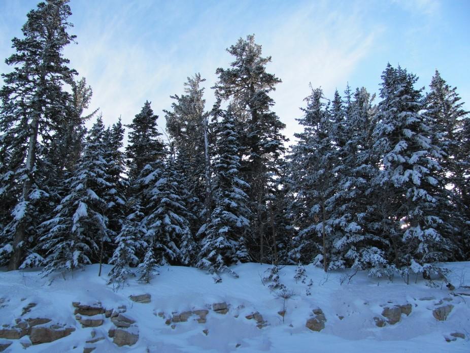Snow in the Sandias 2010