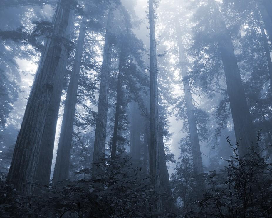 LBJ Redwoods