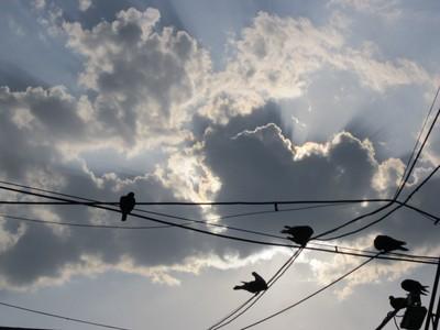 Sky with birds