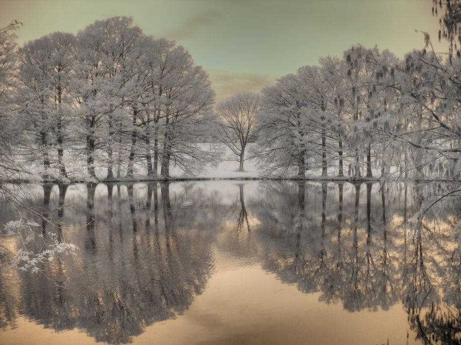 Infrared photo of trees reflection in water.