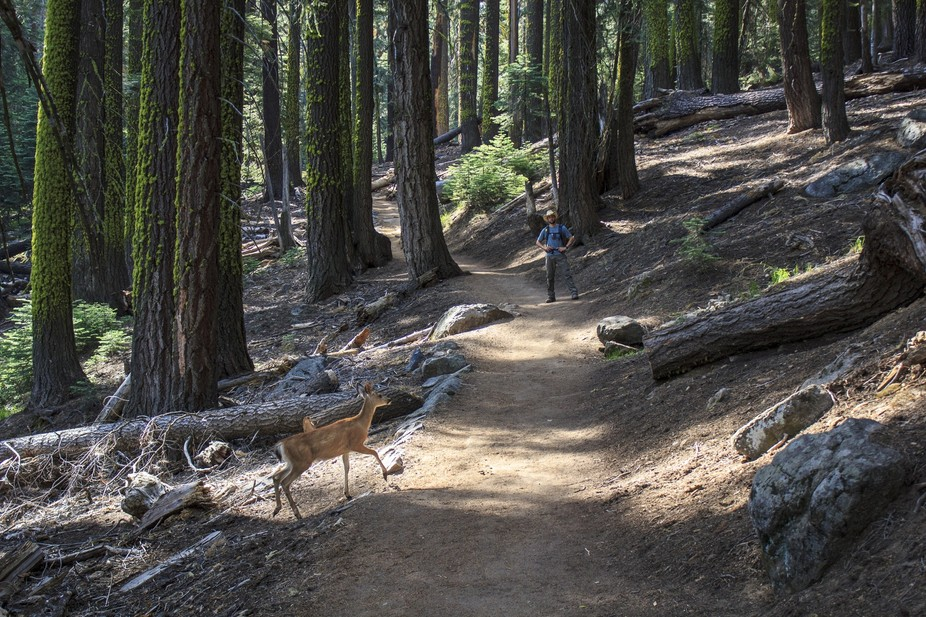 Hiking Glacier Point, Yosemite National Park
