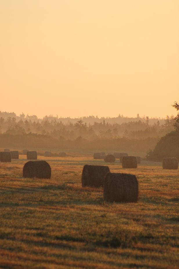 sun rise on hay field