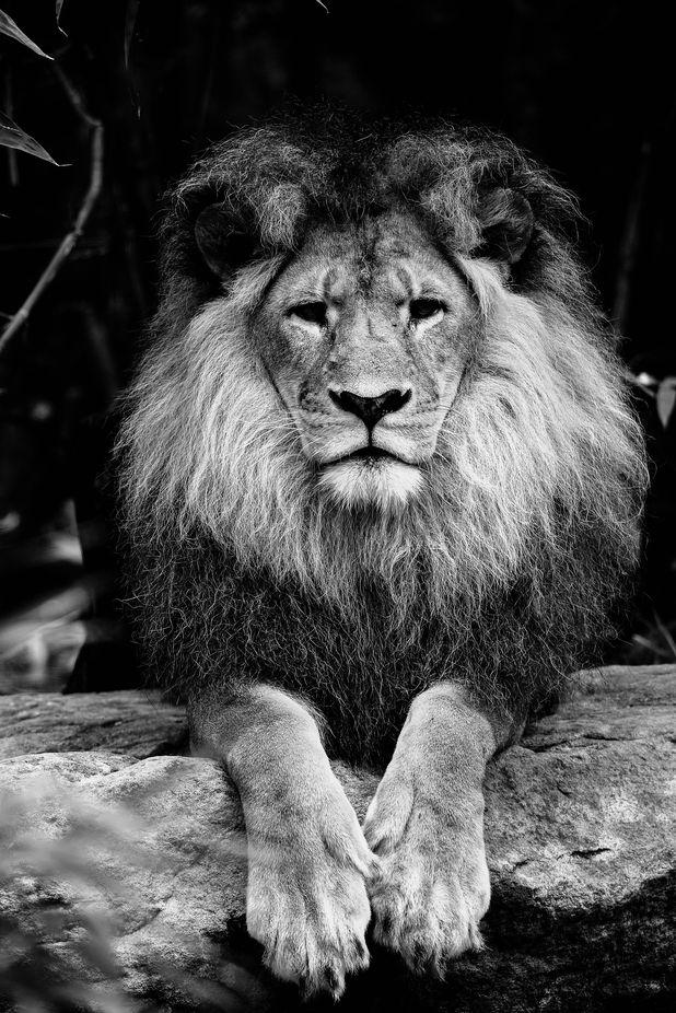 Taronga Zoo (1 of 1)