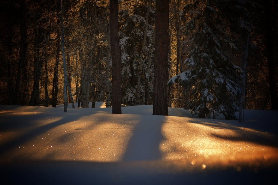 The sunrise reflecting on the freshly fallen snow after a South Dakota snow storm.