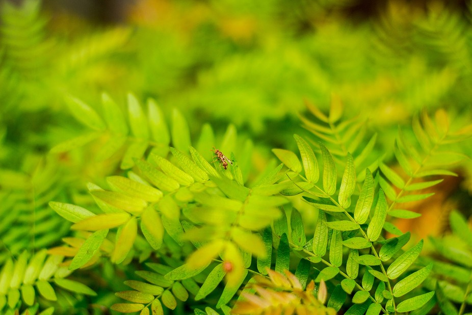 yellow jacket on a plant.
