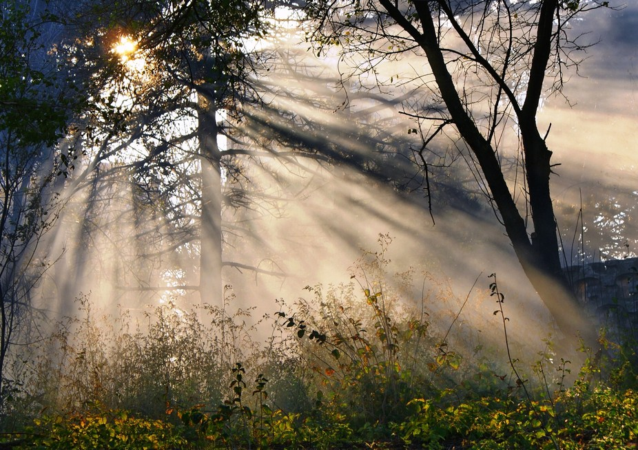 For a walk in the Park, when the fog rises, and the Sun appears