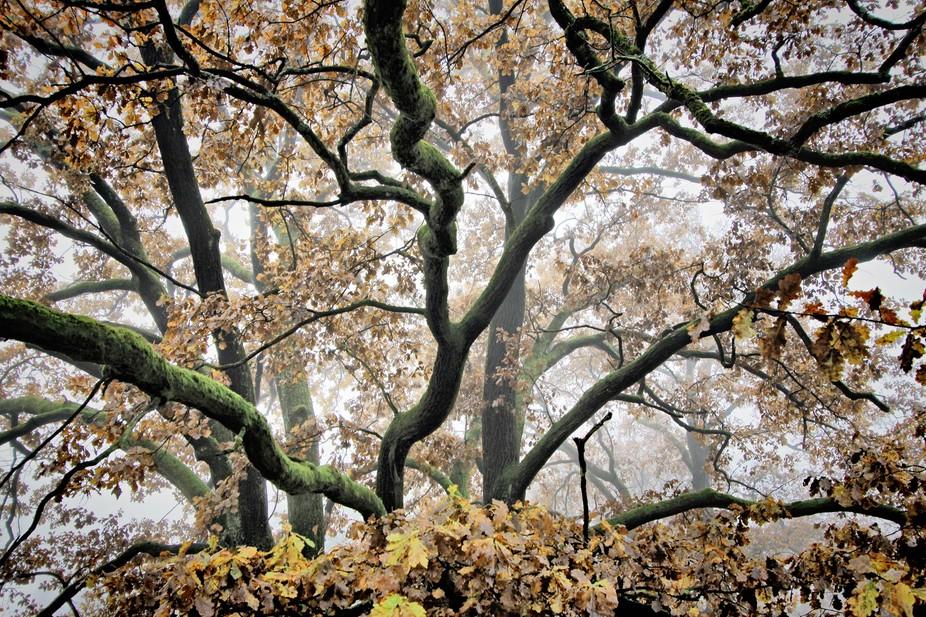 A tree close up.