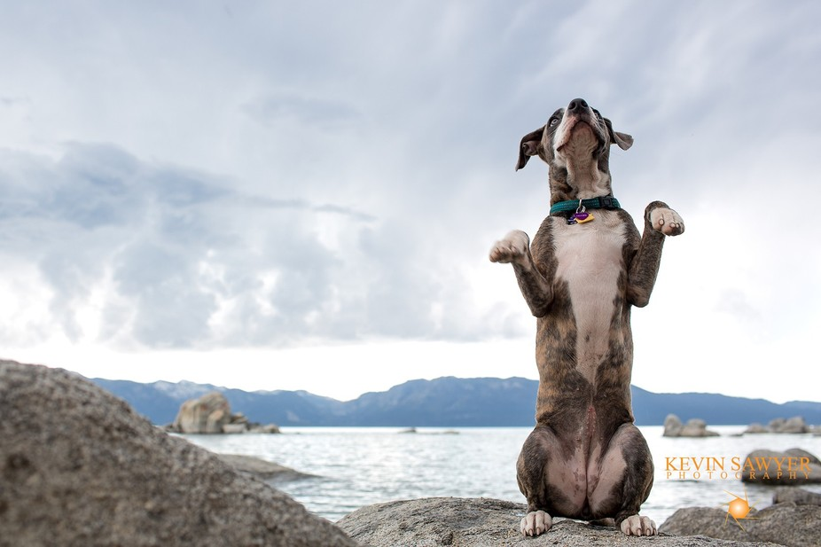 Our Brindle Pitty sitting pretty up at lake Tahoe.  Got some sweet clouds that day.