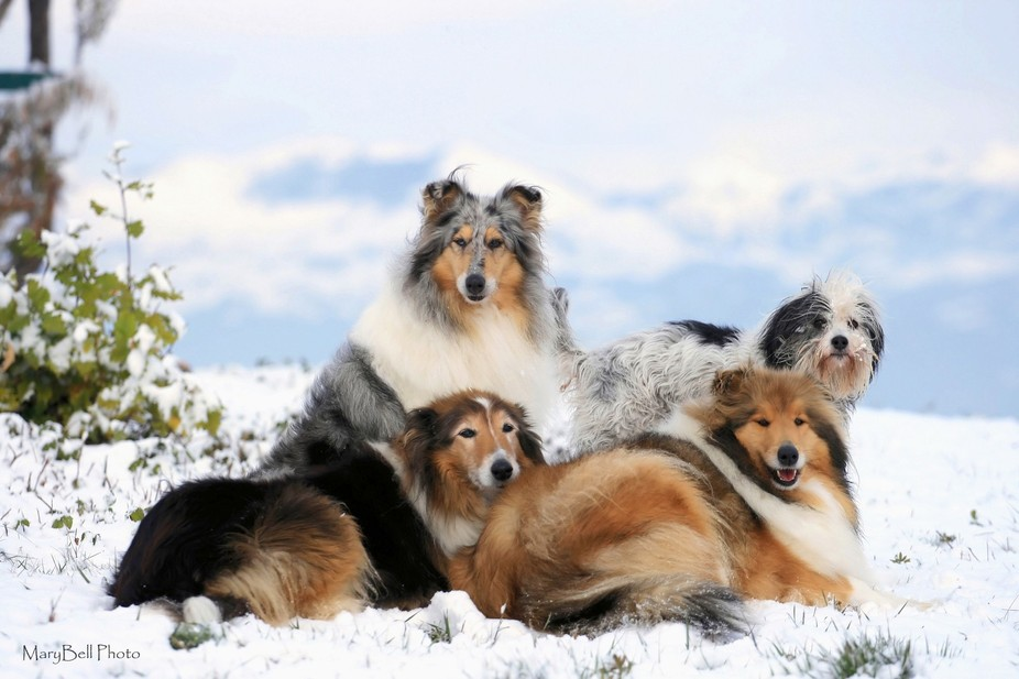 These are all my dogs. Near my home there\'s a wonderful place, a landscape that is very different...