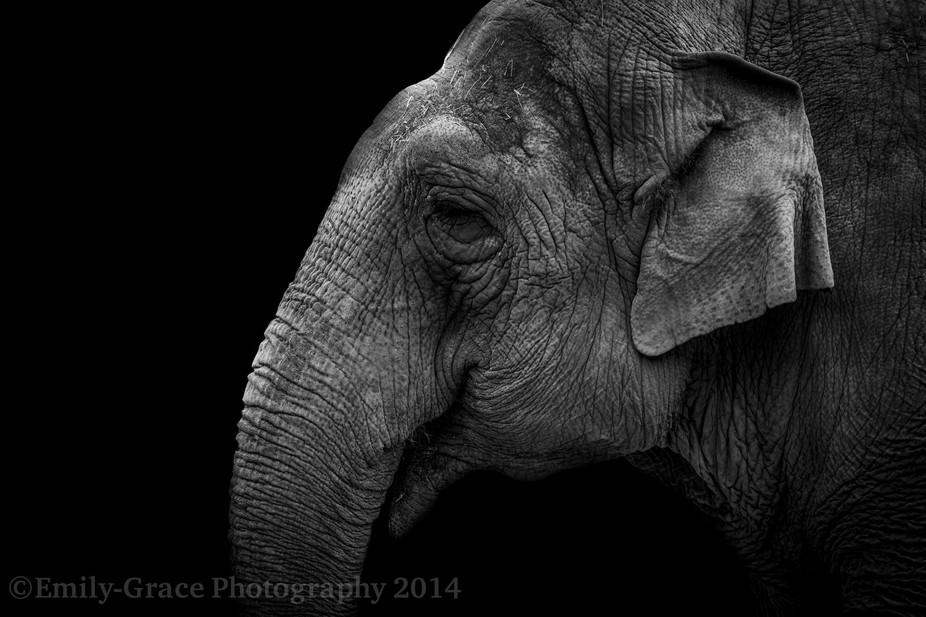 Emily-Grace Photography