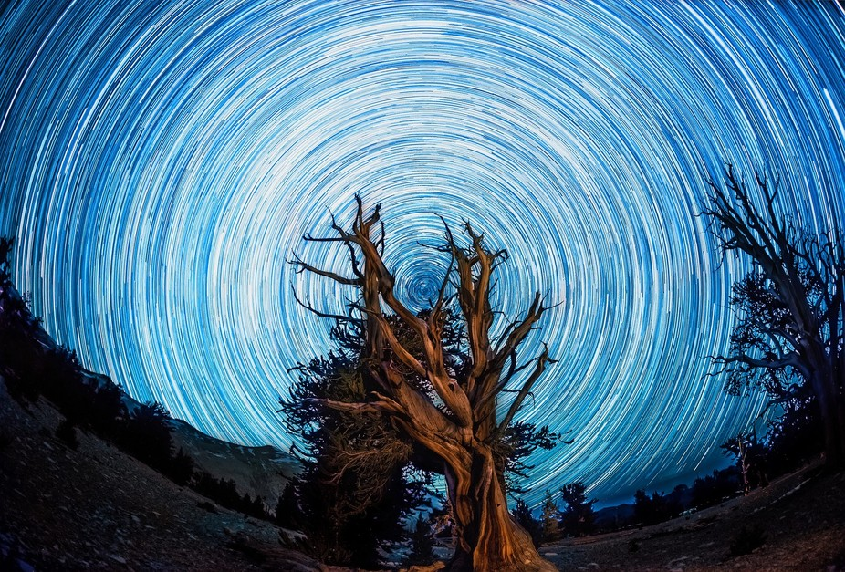 Star Trail at the Ancient Bristlecone Pine Forest in Califronia  This one picture is actually ove...