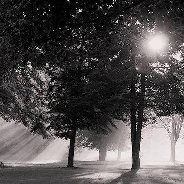 Foggy Landscapes in black and white