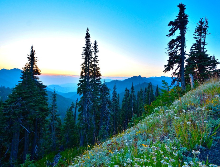 The sun rises over Hurricane Ridge, in the Olympic National Park