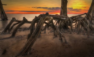 Cypress Cove Sunset