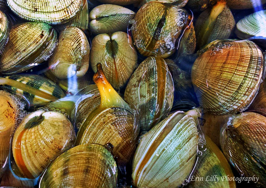 Clam display in Chinatown