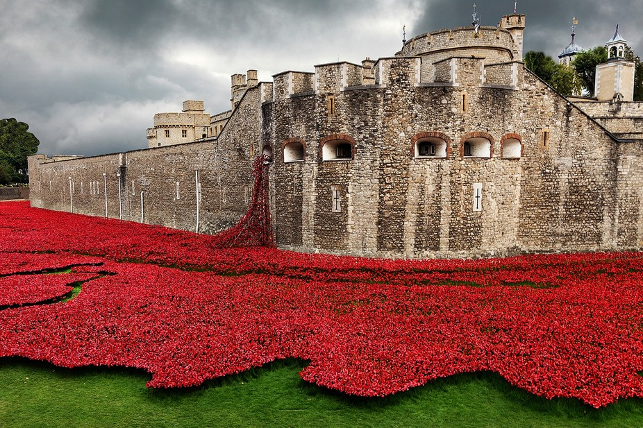 Poppies at Tower of London copy