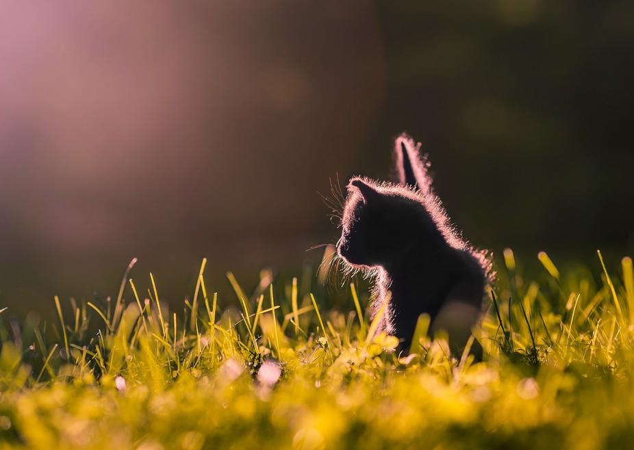 Curious Kitten II