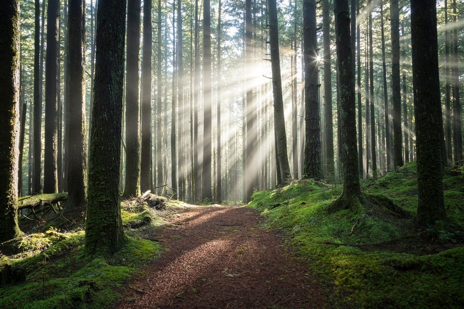 perfect forest light on a sunny afternoon