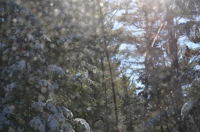 Snow Spangled