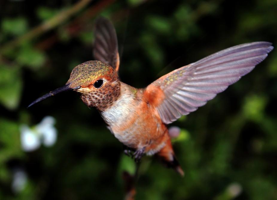Dawn Burns_Portrait of a Hummingbird_2014
