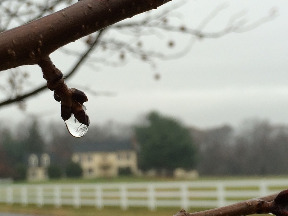 I\' dcarc aptured this lone raindrop on a walk around my neighborhood after the rain.  I used my i...