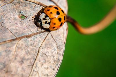 Ladybug Perspective