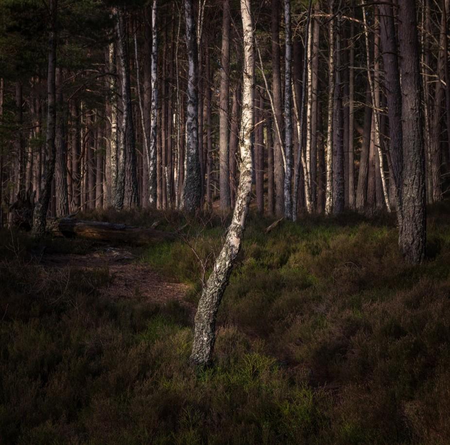 Loch an Eilean Woods #1.jpg
