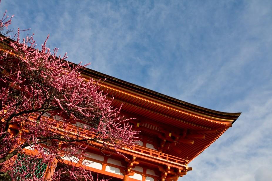 Taken in Kyoto, Japan.