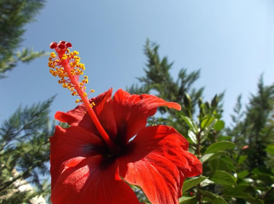 flower alive