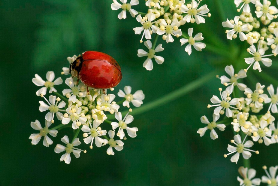 I just liked this little Lady Bug on the Yarrow.  Kind of cool contrast between the orange of the...