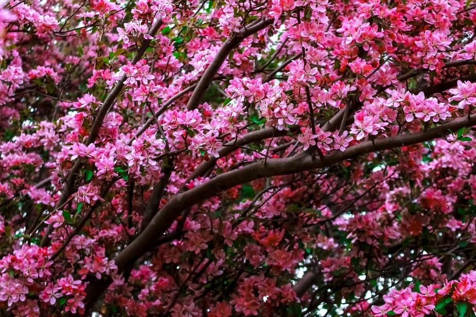 Pink beauty.