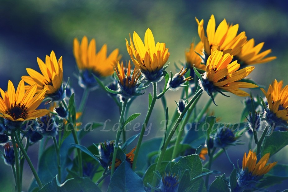 The wild flowers of Idaho, many beautiful things in the mountains