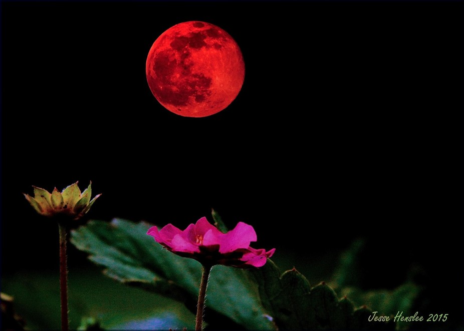 The month of June\'s full Moon\'s name is the Full Strawberry Moon. Got its name because the Algonq...