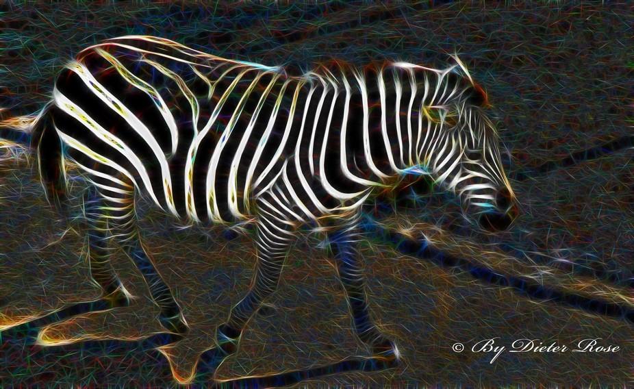 A zebra in fractal designs