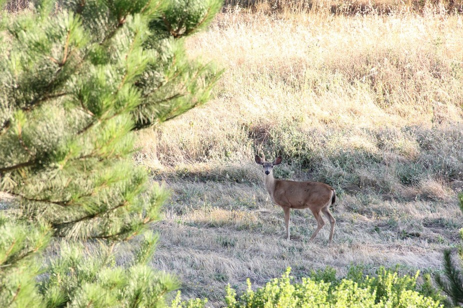 Captured this ...on a walking trail in San Bruno Near hwy 35.....