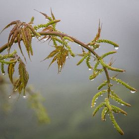 Water from the clouds accumulated on the plants and formed lines of droplets on every surface they could.