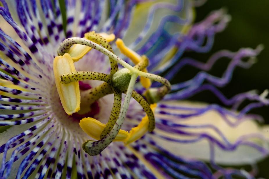 Macro Waving Purple Flower