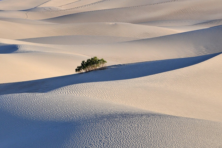 Mesquite dunes, just a while after sunrise