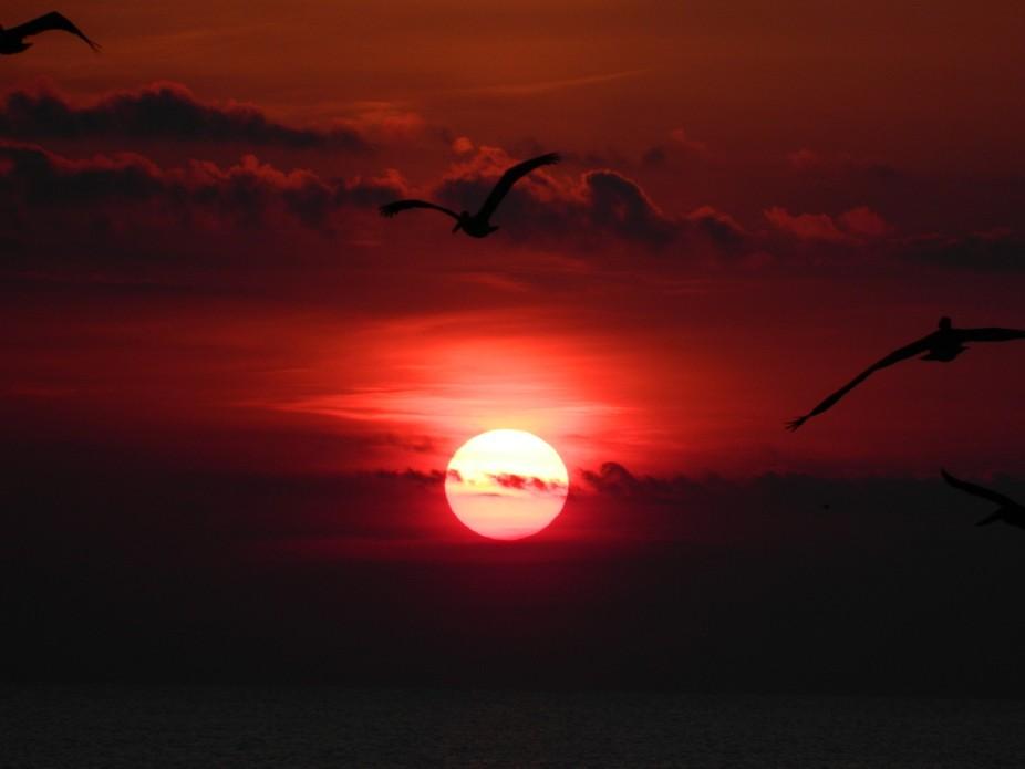 Birds in Flight on Sunrise