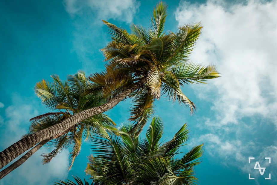 Palm trees and amazing sky at Caribbean town Willemstad on Curacao island.