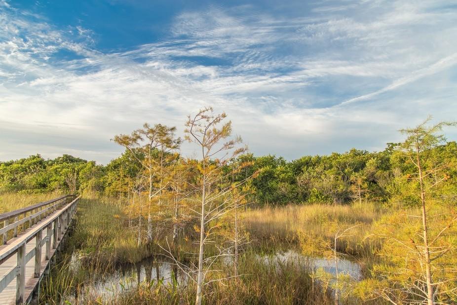 Sunrise in Everglades
