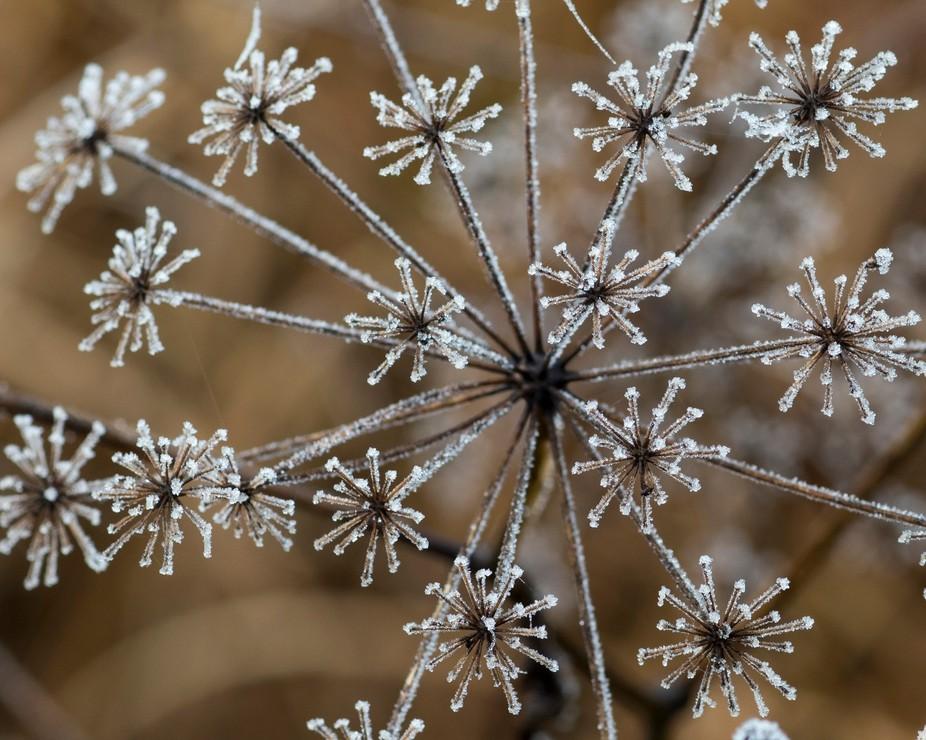 frost burst