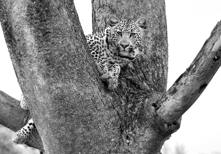 This beautiful girl was happily lounging in the tree and enjoying her afternoon.