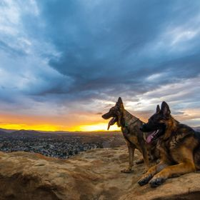 Kaden and Apollo in the Sunset