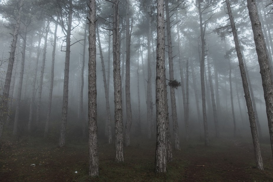 A foggy day, metaphor for life. The difficulty of making constant decisions, to find ourselves al...