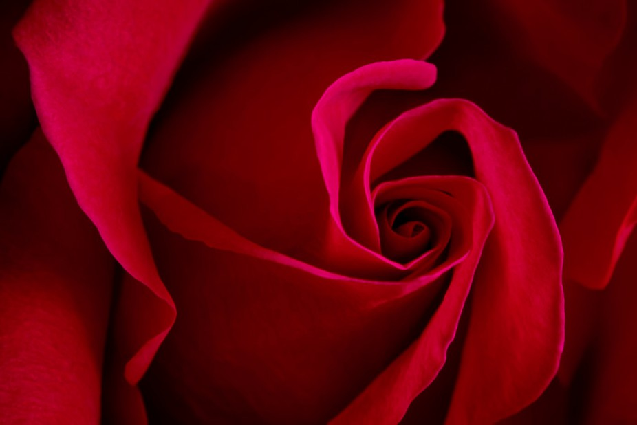 Still life shots are a great way to keep busy during those frigid cold winter days. This rose was...